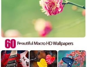 1446540500_60.beautiful.macro.hd.wallpapers